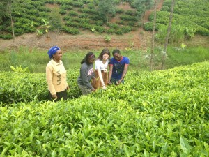Kelsey and Lilian pick tea with Peter Muthomi (Matanya's Hope student) and Mama Lisper in Meru